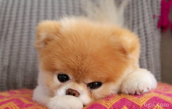 狗狗突然攻击人的主要原因 狗狗攻击人你害怕不?