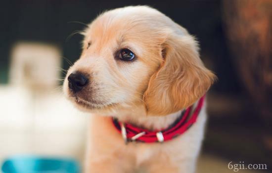 狗狗外耳炎怎么得的 主人要注意护理这些方面