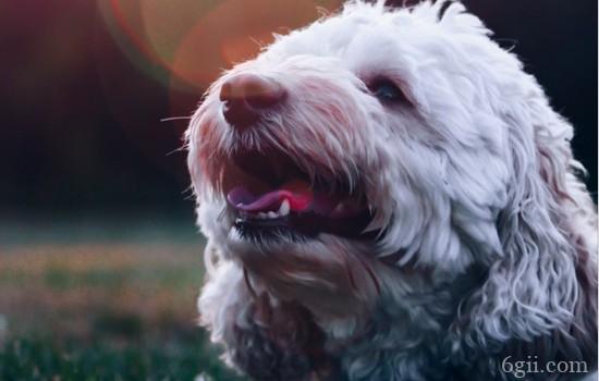 狗狗风湿病的症状 什么情况会引起狗狗风湿病呢?