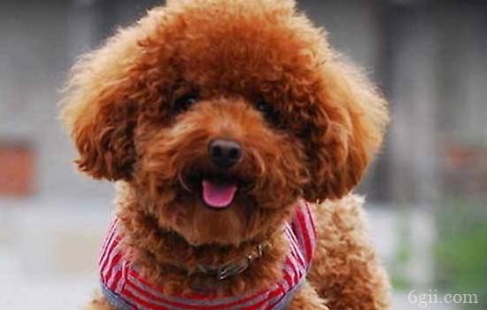狗狗皮肤瘙痒怎么办 你知道背后的原因吗