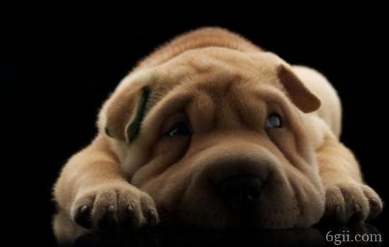 狗狗患慢性肠炎症有哪些 狗狗的慢性肠炎的问题是很严重的