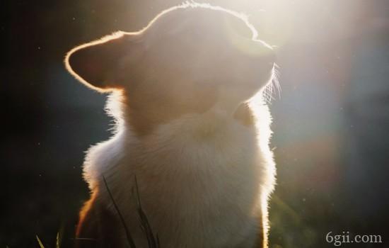 狗狗维生素a缺乏的症状 营养均衡很重要
