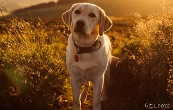 狗狗烧伤怎么处理 生活中这些方面要注意