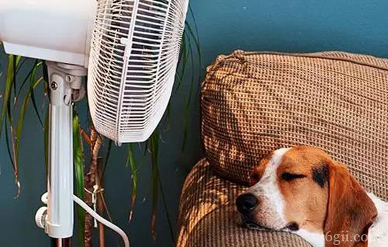 小狗中暑的急救方法 抓住黄金急救时间最关键