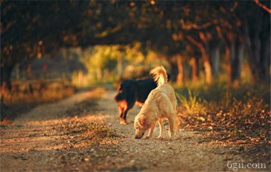 狂犬病能治好吗 狂犬病为什么难治