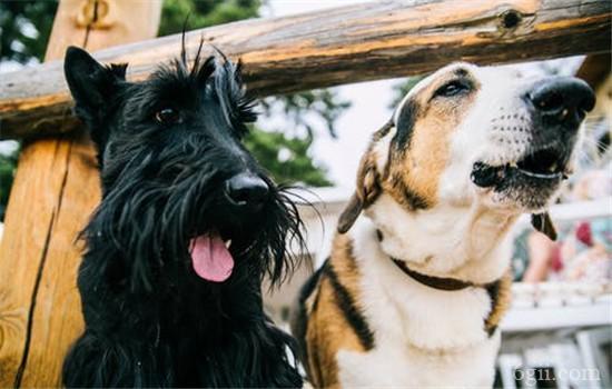 狗狗缺钙会怎么样 狗狗缺钙的表现有哪些