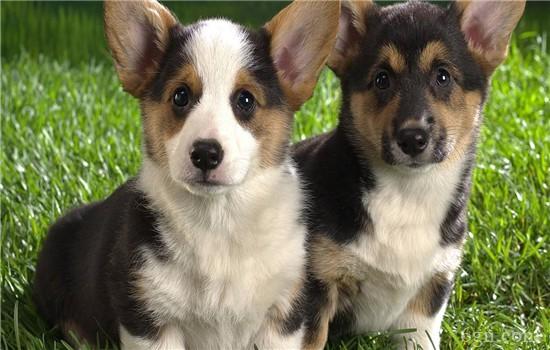 幼犬感冒怎么办 赶紧给狗狗治疗啊!