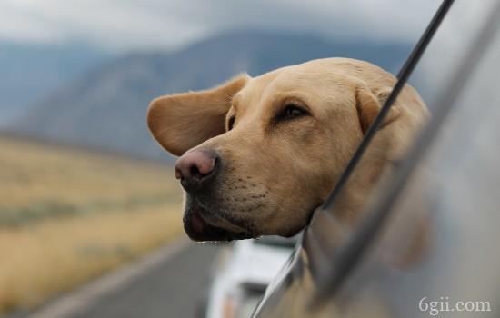 狗狗意外受伤时的急救处理 抽筋烫伤夹伤等的应急处理办法
