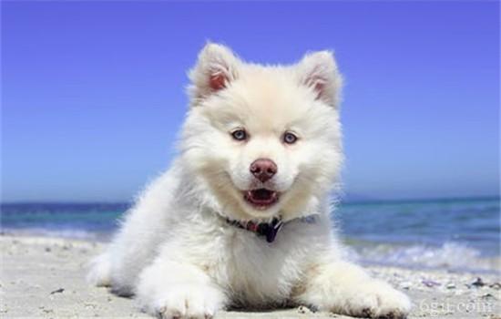 狂犬病的症状 被狗咬伤后一定要立即去医院