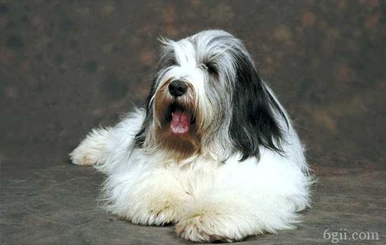 狗狗皮肤瘙痒怎么办 可能是皮肤瘙痒症!