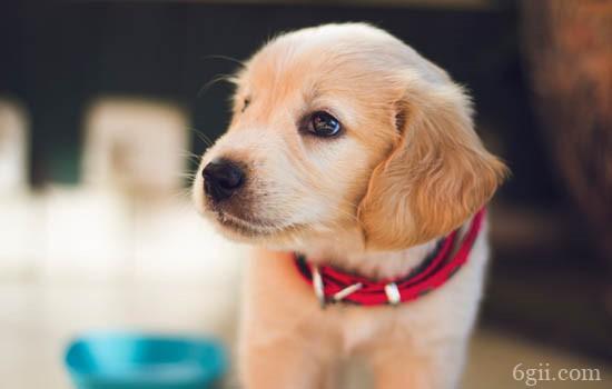 犬自咬症 犬自咬症该如何治疗