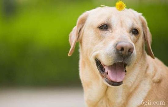狗狗关节炎原因 关节炎这个问题可是不小呢!