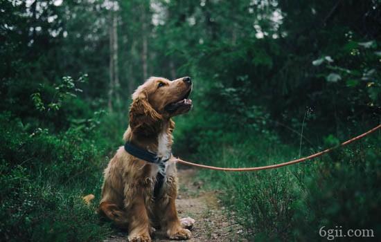狗狗湿疹怎么治 狗狗湿疹的症状是什么
