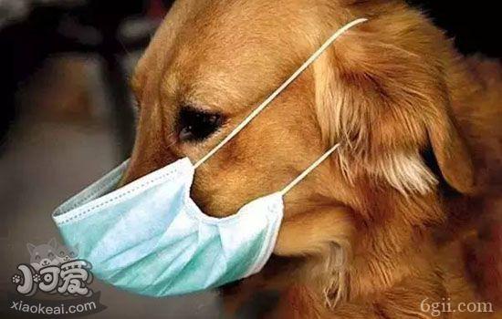 狗狗肺炎怎么办 还认为狗狗肺炎是小问题吗