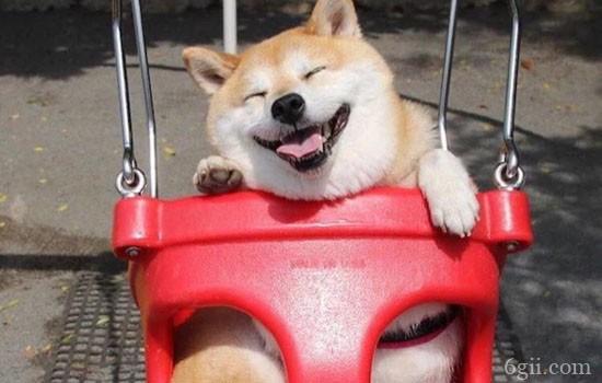 狗狗鼻子湿是正常的吗 狗狗鼻子干怎么回事