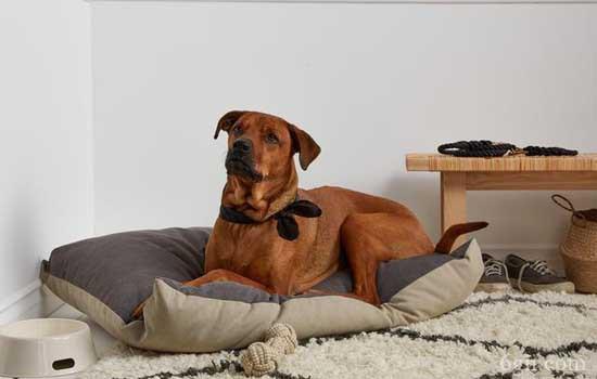 狗狗便秘拉不出来怎么办 狗狗便秘造成的危害