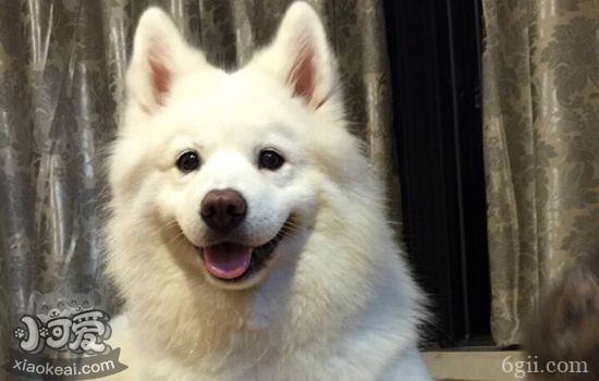 狗吐胃酸是怎么回事 狗狗突然呕吐黄色液体的原因