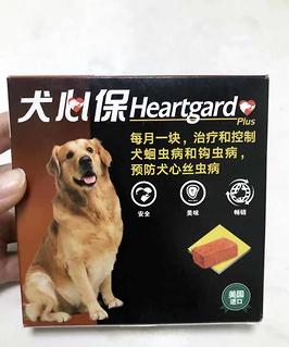 心丝虫可防可预?狗狗驱虫药选择要谨慎