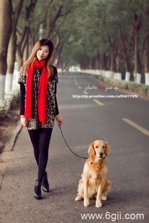 宠物狗金毛