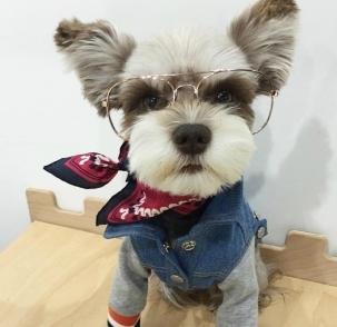 狗狗届的时尚