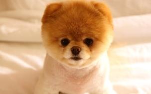 狗狗图片,可爱萌狗狗