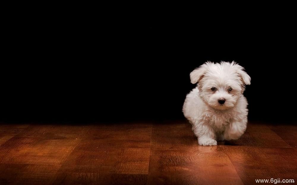 宠物狗户外摄影