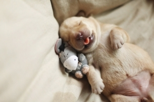 萌萌哒可爱的小奶狗