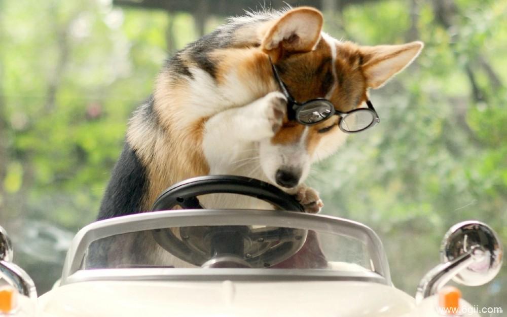 搞怪的宠物狗狗