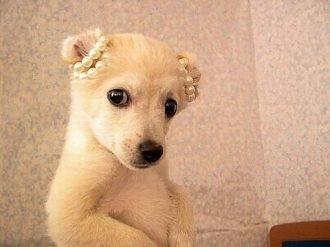 lomo萌系可爱小狗